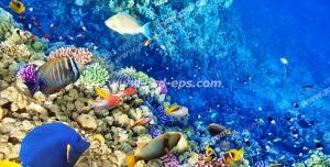 عکس با کیفیت از ماهی های رنگی زیبا در عمق دریا در کنار سنگ های مرجانی مناسب آسمان مجازی آکواریوم