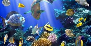 عکس با کیفیت شنای ماهی های رنگارنگ در میان تلالو نور در آب و در کنار مرجان های قیطانی مناسب آسمان مجازی آکواریوم