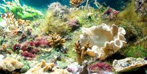 عکس با کیفیت مناسب آسمان مجازی آکواریوم با نمایی از مرجان های نرم و جلبک های کف دریا