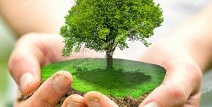 عکس با کیفیت تبلیغاتی یک تکه از زمین شامل یک درخت سبز در دستان فرد