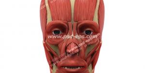 عکس با کیفیت تبلیغاتی عضله و ماهیچه های صورت انسان از نمای تمام رخ