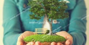 عکس با کیفیت تبلیغاتی تکه ای از زمین با درخت و یک نیمکت زیر آن در دست مرد