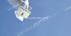 عکس با کیفیت تبلیغات پرنده در حال آوردن نامه