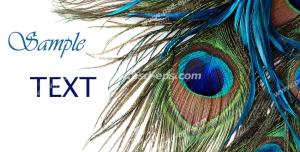 عکس با کیفیت تبلیغات کارت پستال با طرح پر زیبای طاووس