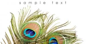 عکس با کیفیت تبلیغات کارت پستال با طرح دو پر طاووس