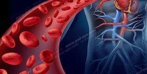 عکس با کیفیت تبلیغاتی خون رسانی به قلب