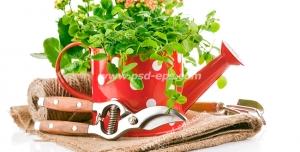 عکس با کیفیت تبلیغاتی گل در آبپاش باغبانی قرمز رنگ