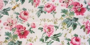 عکس با کیفیت تبلیغاتی گل های رز صورتی زیبا در زمینه سفید