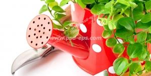 عکس با کیفیت تبلیغاتی گل در آبپاش باغبانی