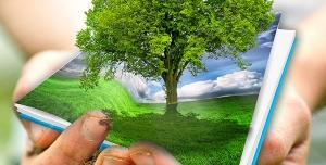 عکس با کیفیت تبلیغاتی درخت در دست های زن
