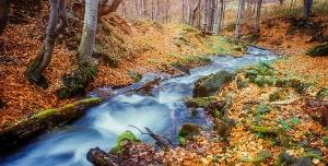 عکس با کیفیت تبلیغاتی رود در جنگل پاییزی