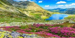 عکس با کیفیت تبلیغاتی دره پر گل و آسمان آبی