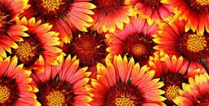 تصویر استوک گلها با کیفیت 2160*3840