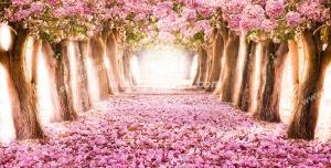 عکس با کیفیت تبلیغاتی درختان با برگ های صورتی