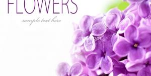 عکس با کیفیت تبلیغاتی گل های بنفشه زیبا