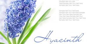 عکس با کیفیت تبلیغاتی گل زیبا آبی