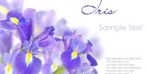 عکس با کیفیت تبلیغاتی گل های بنفش زیبا