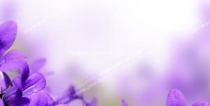 عکس با کیفیت تبلیغاتی دشت گل های بنفش زیبا