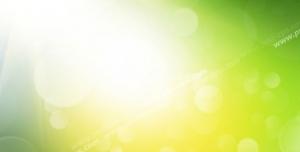 عکس با کیفیت تبلیغاتی بابونه های وحشی و پرتوی نور