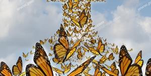 عکس با کیفیت تبلیغاتی پروانه هایی که فلش را تشکیل داده اند