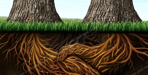 عکس با کیفیت تبلیغاتی دست دادن ریشه های درخت به یکدیگر