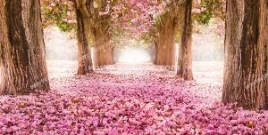 عکس با کیفیت تبلیغاتی درخت خزان دار با برگ های صورتی