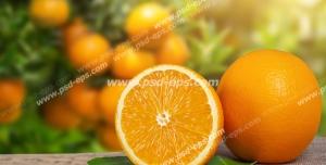 عکس با کیفیت تبلیغاتی پرتقال نصف شده در باغ سرسبز پرتقال
