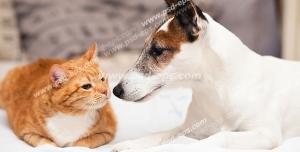 عکس با کیفیت تبلیغاتی سگ و گربه زیبا نشسته در کنار هم