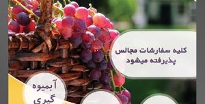 طرح آماده لایه باز پوستر یا تراکت میوه فروشی و سوپر میوه و سبزیجات با محوریت تصویر انگور های قرمز در سبد حصیری و نور خورشید