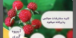 طرح آماده لایه باز پوستر یا تراکت میوه فروشی و سوپر میوه و سبزیجات با محوریت تصویر تمشک قرمز بر روی شاخه درخت پر برگ