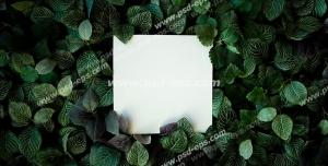 عکس با کیفیت تبلیغاتی یک برگه ی سفید مربع شکل در لا به لای برگ ها