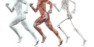 عکس با کیفیت تبلیغاتی آناتومی انسان در حال دویدن و تکامل پیدا کردن