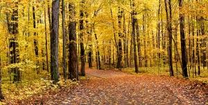 دانلود عکس و تصویر با کیفیت بالا و زیبای درختان در پاییز و برگ ها به رنگ زرد