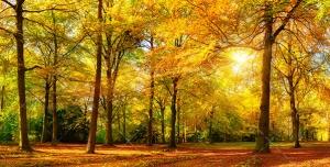 دانلود عکس و تصویر با کیفیت بالا و زیبای تابیده شدن نور خورشید از لابه به لای درختان پاییزی