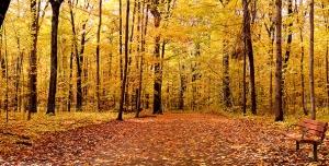دانلود عکس و تصویر با کیفیت بالا و زیبای نیمکت چوبی در دل جنگل پاییزی و درختان با برگ های زرد و نارنجی