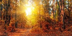 دانلود عکس و تصویر با کیفیت بالا و زیبای پرتوهای نور زرد خورشید در لا به لای شاخه ها و برگ های نارنجی درختان