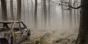 پس زمینه لایه باز جنگل مه آلود