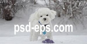 سگ در برف